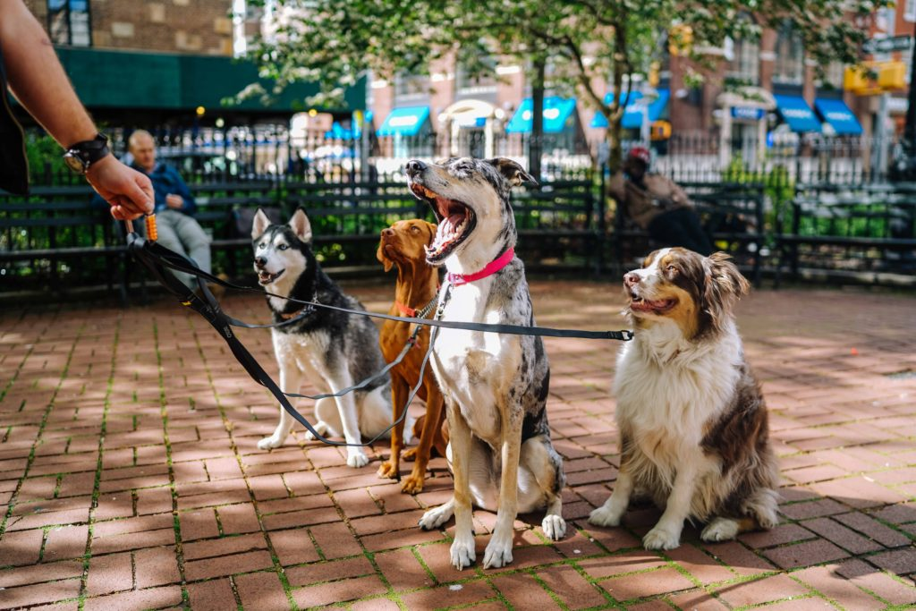 Groupe-de-chiens